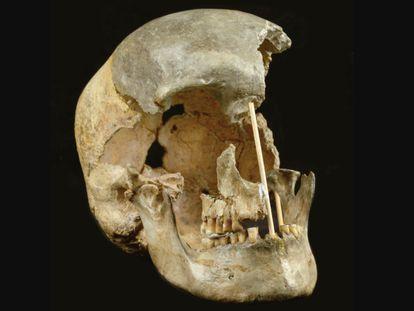 Crânio de uma mulher que viveu há 45.000 anos na atual República Tcheca, um dos restos analisados.