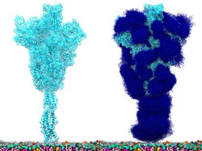 A proteína espícula do SARS-CoV-2 'nua' (à esquerda) e coberta com a camada de glicanos (açúcares) que a protegem e a escondem de nosso sistema imunológico (direita).