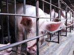 Bactérias resistentes a antibióticos foram encontradas em fazendas de criação