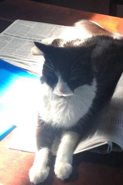Nana, uma das gata de Juan Arias.
