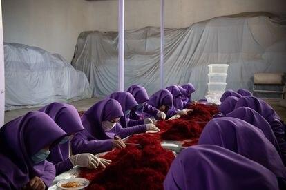 Grupo de mulheres trabalha o açafrão em Herat (dezembro de 2018).