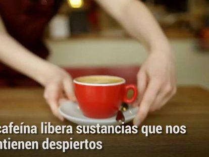 Cafeína pode regular o sono