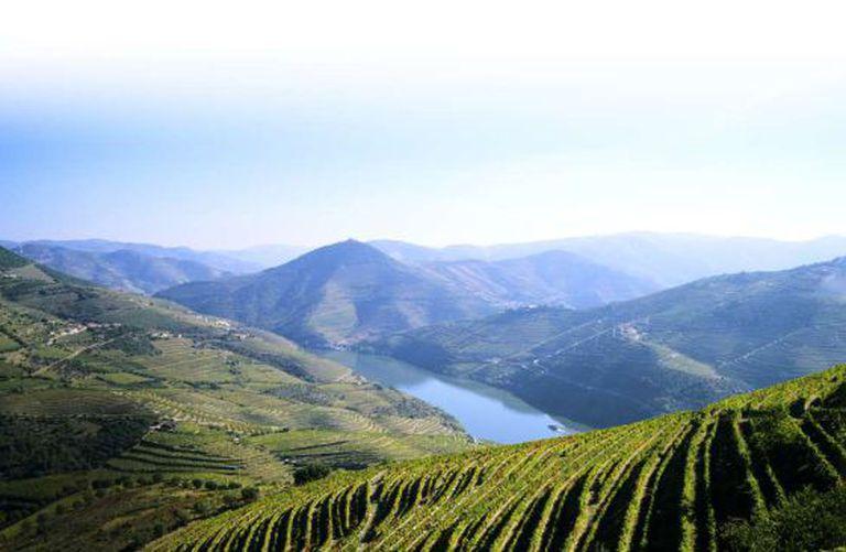 Paisagem de vinhedos na Quinta do Infantado, em Pinhão, situada na região do Douro.