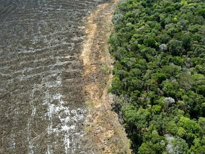 Imagem aérea de uma área desmatada na região de Sinop, no Mato Grosso, em agosto passado.