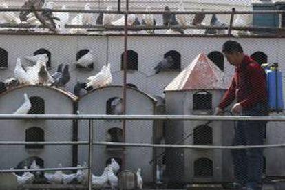 Um trabalhador chinês desinfeta um pombal como medida preventiva contra a gripe aviária na cidade portuária de Qingdao, no leste da China, em 2019.