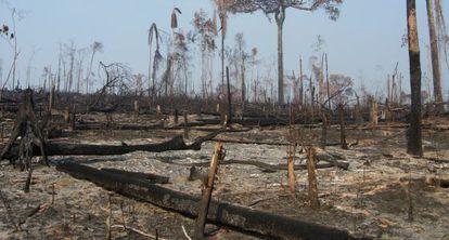 A Amazônia já perdeu quase 20% de sua extensão original.