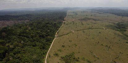 Imagem de desmatamento na região de Novo Progresso, no Pará.