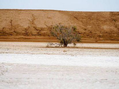 Fragmento do documentário 'Os desertos de Sonora'