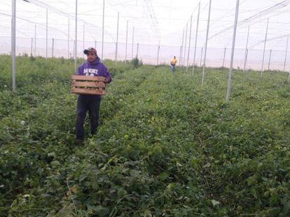 Um dos projetos de agricultura da organização Alma, em Zacatecas, onde trabalham migrantes deportados.
