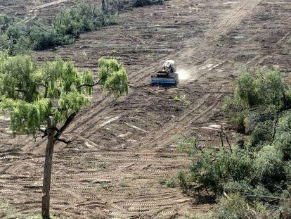 Uma escavadeira limpa uma floresta na província de Salta