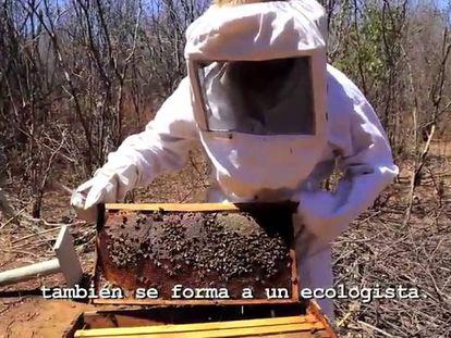As abelhas mostram como o clima está mudando