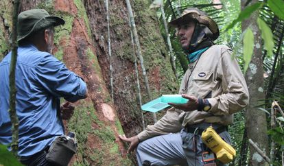 Pesquisadores das árvores gigantes da Amazônia.