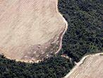 Zonas de selva convertidas en cultivos rodean la Amazonia todavía virgen en el Estado de Mato Grosso (Brasil).