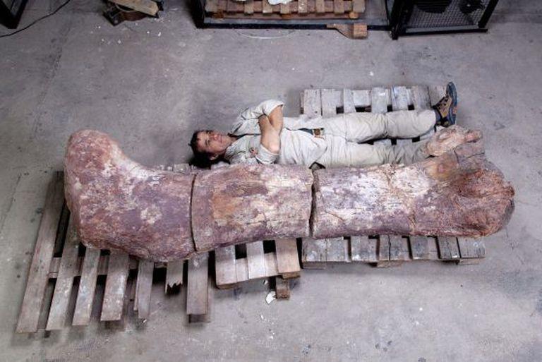 O paleontólogo Pablo Puerta, ao lado do fêmur de dinossauro.