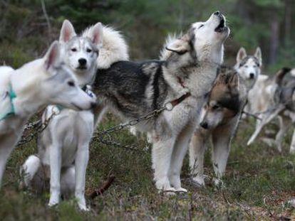 Macroestudo de DNA canino fóssil e moderno acaba com uma antiga disputa sobre a origem do animal de estimação por excelência