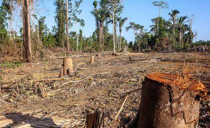 Operação realizada pelo IBAMA - Instituto Brasileiro do Meio Ambiente e dos Recursos Naturais Renováveis - com o apoio policial da Força Nacional, na Terra Indígena Ituna-Itatá, na bacia do rio Xingu.