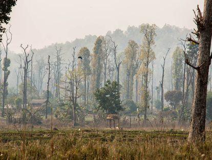 Assentamento humano no parque nacional de Chitwan, no Nepal.