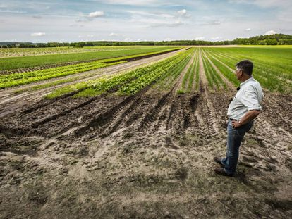 O produtor Ludolf Van Maztlan observa seus cultivos ecológicos no estado de Brandenburgo (Alemanha).