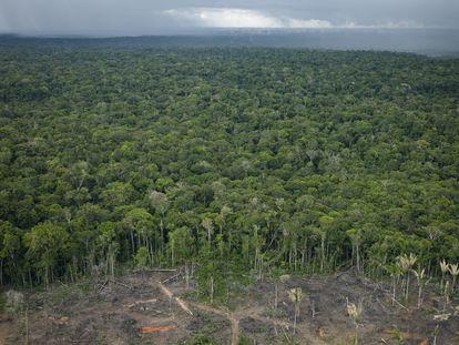 Vista área do desmatamento na Amazônia.