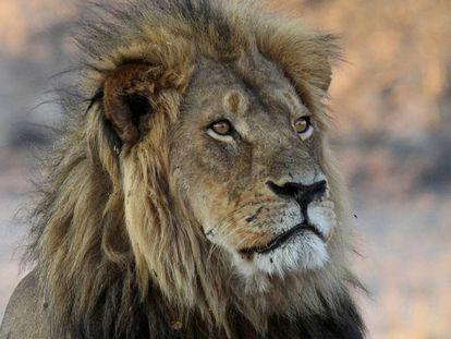 O último rugido do leão Cecil