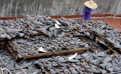 Secagem de barbatanas de tubarão no telhado de uma edificação na China.