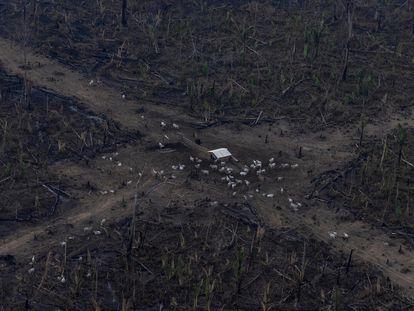 Vista aérea de um desmatamento na Amazônia para expansão pecuária, em Lábrea, Amazonas.