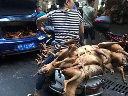 Vários açougueiros com cães sacrificados no mercado de Yulin, nesta quinta-feira
