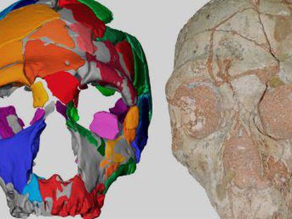 Um polêmico estudo sugere que os 'sapiens' migraram para a Europa muito antes do que se acreditava e foram substituídos por neandertais