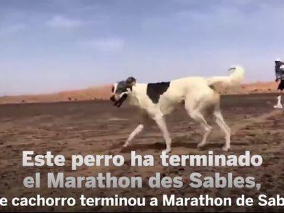 Cactus, o primeiro cão a completar uma das mais difíceis maratonas do mundo
