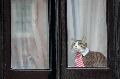 Um dos gatos mais famosos do século XXI: o que vive com Julian Assange e usa uma gravata colorida.