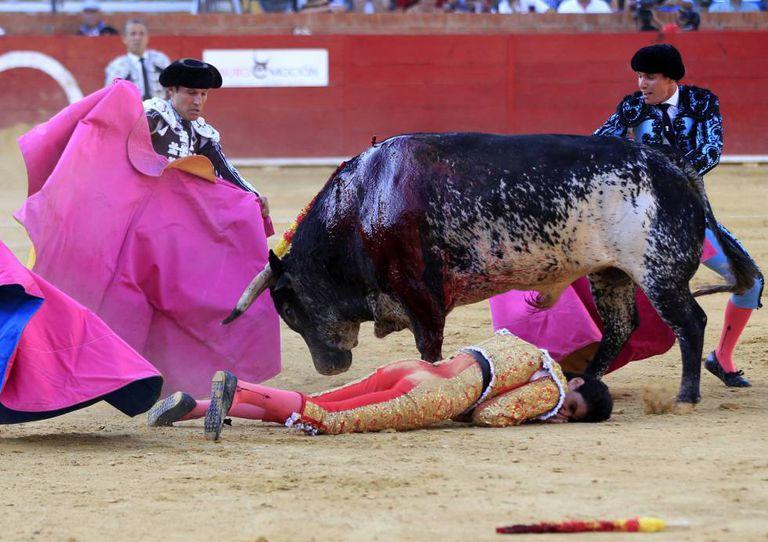 O toureiro Victor Barrio, após ser atingido por uma chifrada.