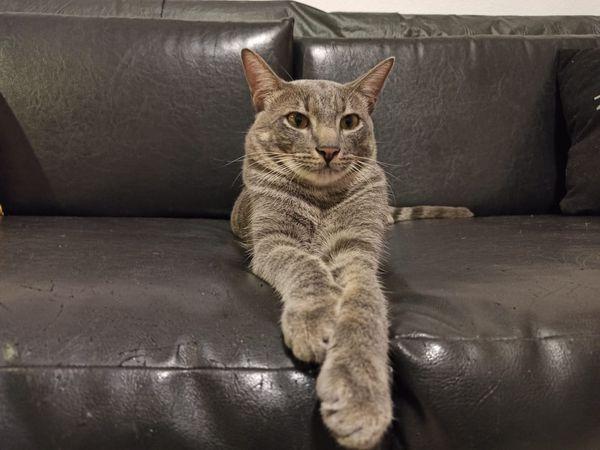 O gato Moreré.