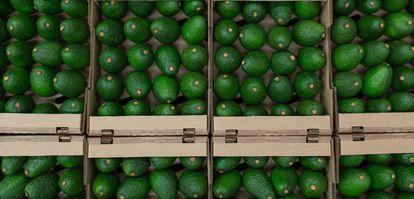 Caixa de abacates.