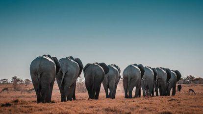 Elefantes no Parque Nacional de Etosha, na Namíbia.