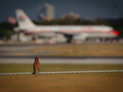 Pássaro observa um avião.
