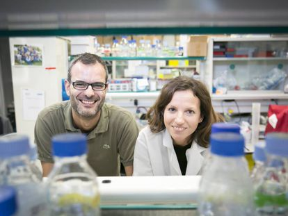 Salvador Aznar e Glória Pascual, pesquisadores do IRB.