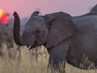 Turismo africano perde milhões devido à matança de elefantes