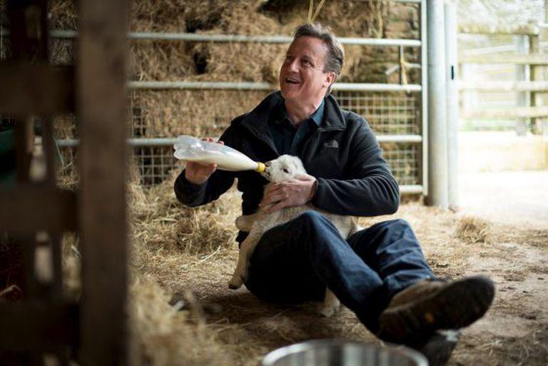 David Cameron alimenta um cordeiro em uma fazenda, domingo passado em Chadlington.