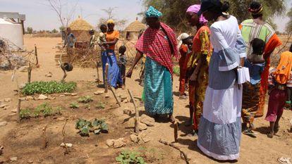 Mulheres mostram a horta mantida graças à água da cisterna.