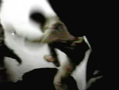Vídeo de soldados espanhóis agredindo um detento em Diwaniya.