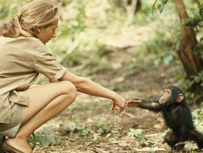 A primatóloga Jane Goodall.