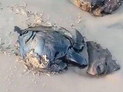 Oito Estados já identificaram praias poluídas e animais mortos pelo óleo. Ibama diz não saber a origem, mas secretaria do Meio Ambiente de Pernambuco afirma que material foi descartado por  navio não identificado