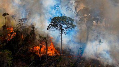 Incêndio na reserva Novo Progresso, no Pará, em agosto.