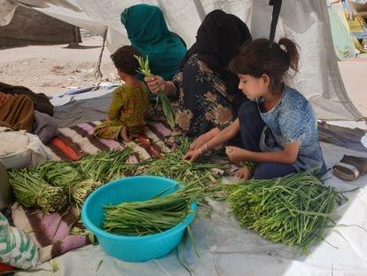 Parwana, cujo marido morreu num ataque do Talibã à sua barbearia, limpa hortaliças com uma de suas filhas e uma vizinha no parque de Cabul onde vivem.