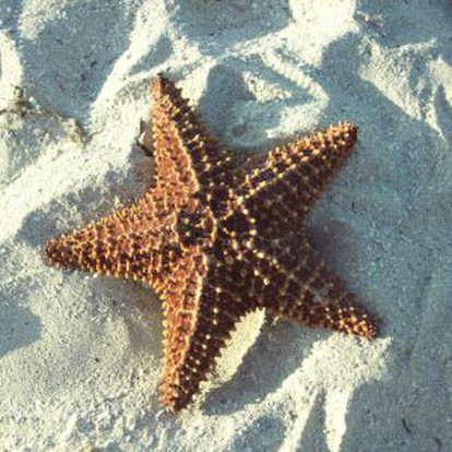 Uma estrela do mar em Cuba.