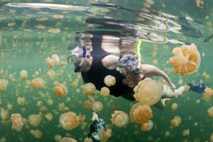 Snorkel no lago das Medusas, ilha de Eil Malk, no arquipélago das Palau (Micronésia).