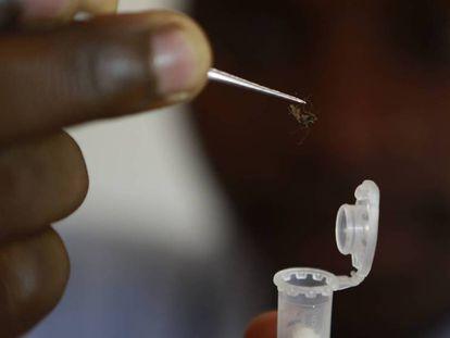 Coleta de mosquitos para o estudo da malária.