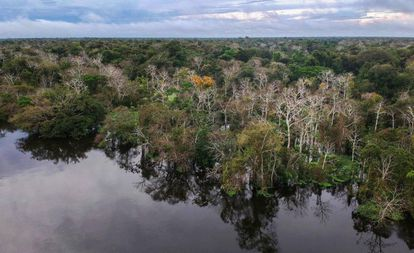 Rio Jarauá, na Reserva de Desenvolvimento Sustentável Mamirauá, Amazonas.