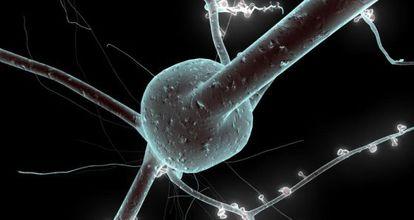 Na imagem, um modelo 3D de neurônio reconstruído a partir de dados de laboratório.