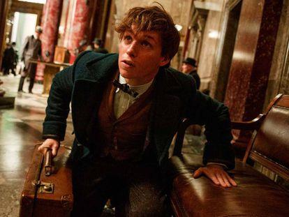 Sai novo trailer de 'Animais Fantásticos e Onde Habitam', o 'spin-off' de Harry Potter